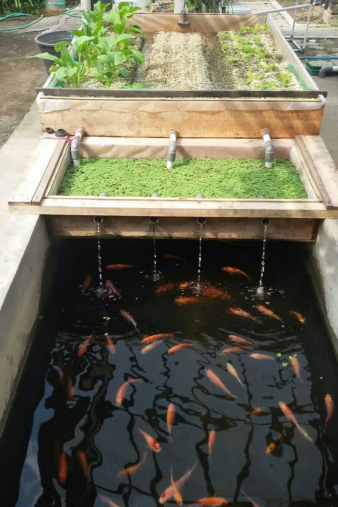 Hydroponic Gardening With Fish
