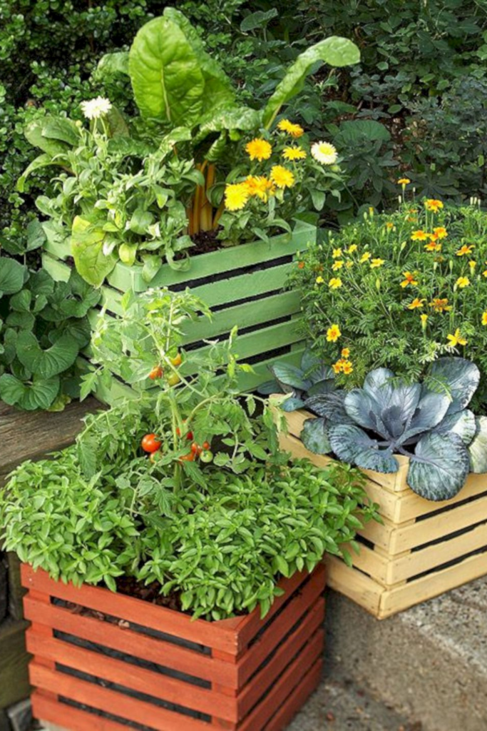 Container Gardening For Beginners