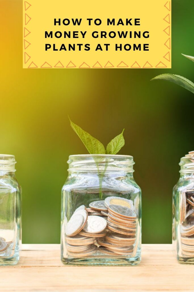 How to Make Money Growing Plants at Home