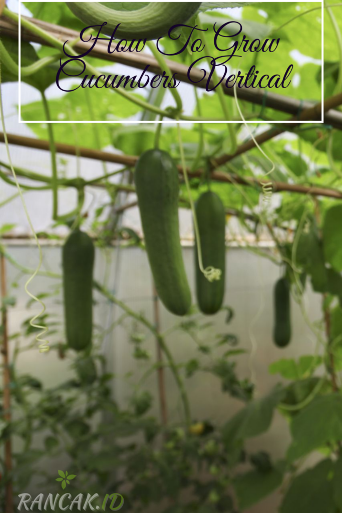 How To Grow Cucumbers Vertical
