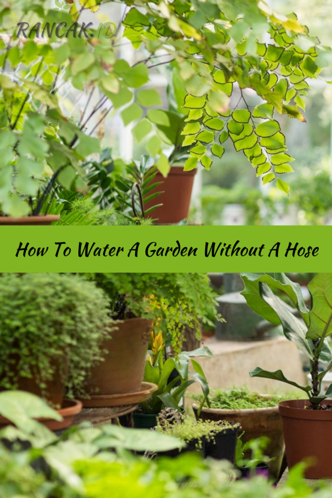 How To Water A Garden Without A Hose