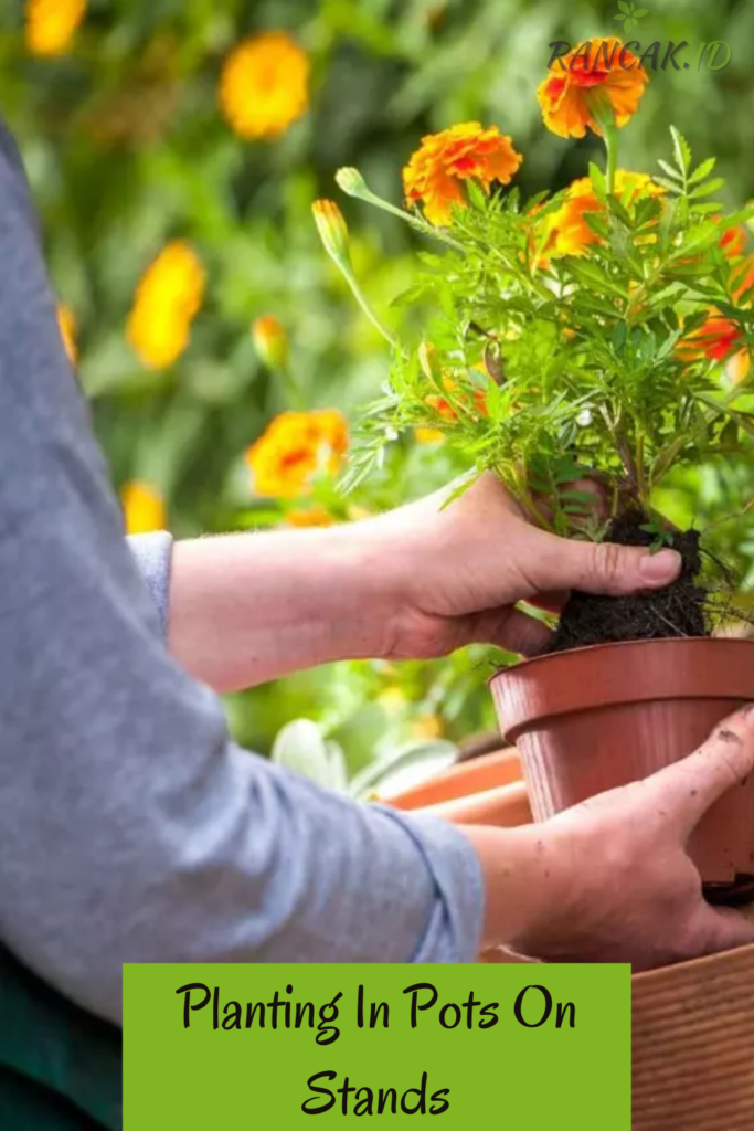 Planting In Pots On Stands