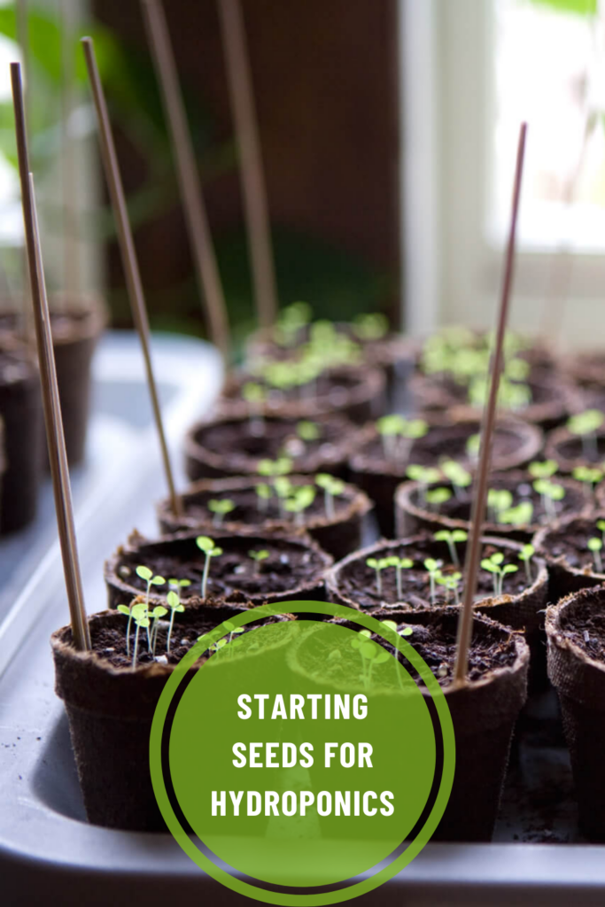 Starting Seeds For Hydroponics