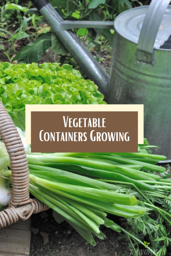 Vegetable Containers Growing