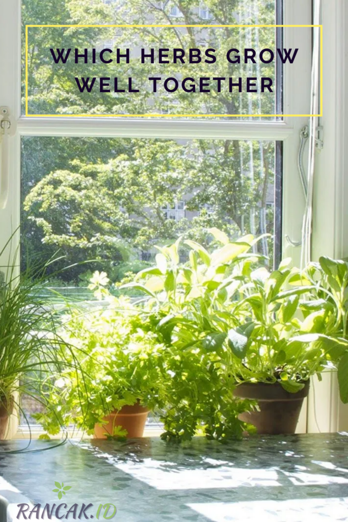 Which Herbs Grow Well Together