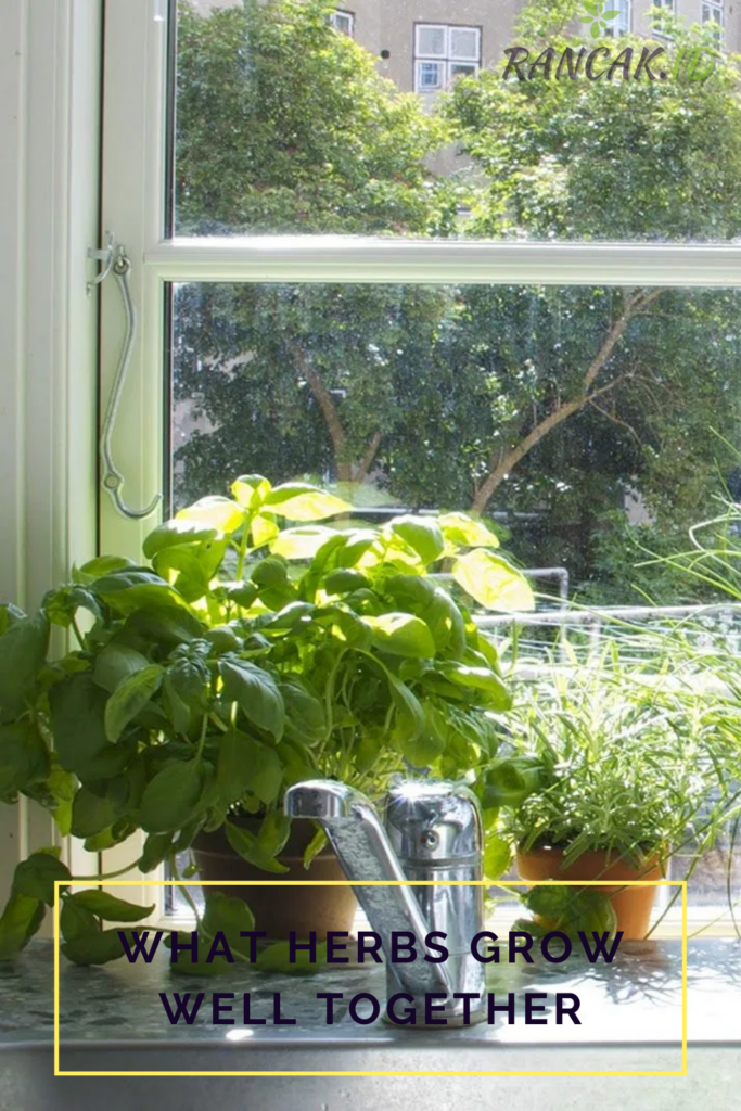 what herbs grow well together
