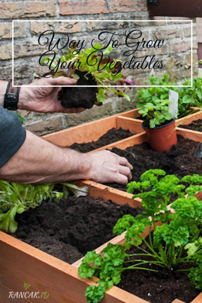A Square Foot Garden Is A Great Way To Grow Your Vegetables, Herbs, And Flowers