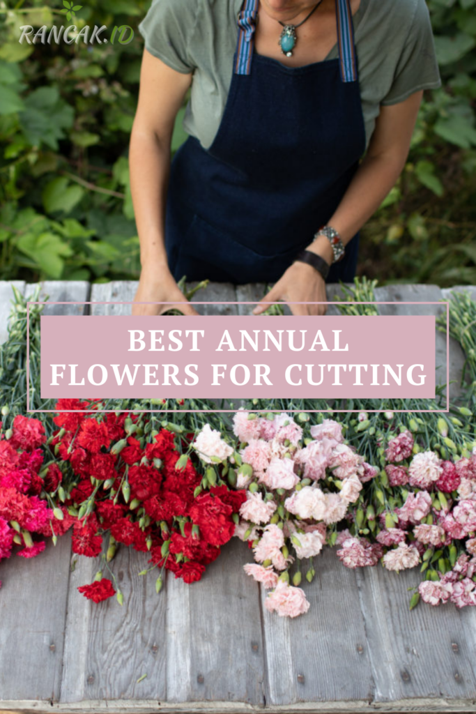 Best Annual Flowers For Cutting