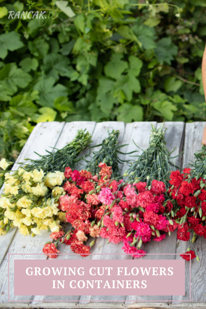 Growing Cut Flowers In Containers