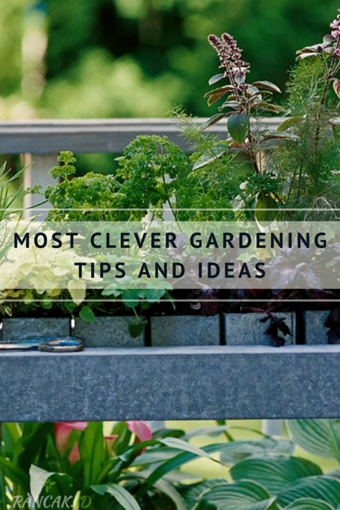 Most Clever Gardening Tips And Ideas