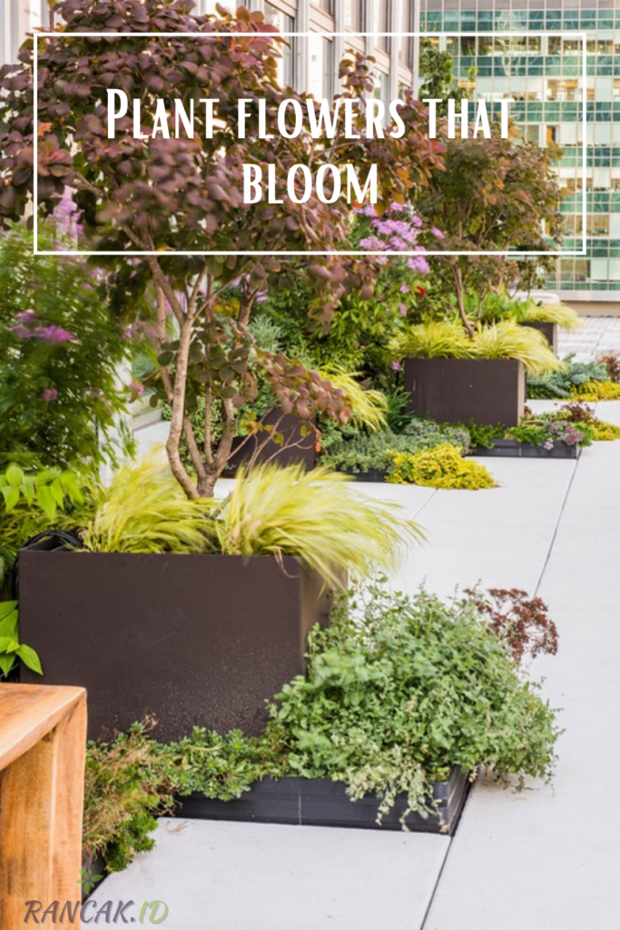 Plant flowers that bloom at different times of the year so you can enjoy them all season long