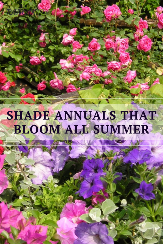 Shade Annuals That Bloom All Summer