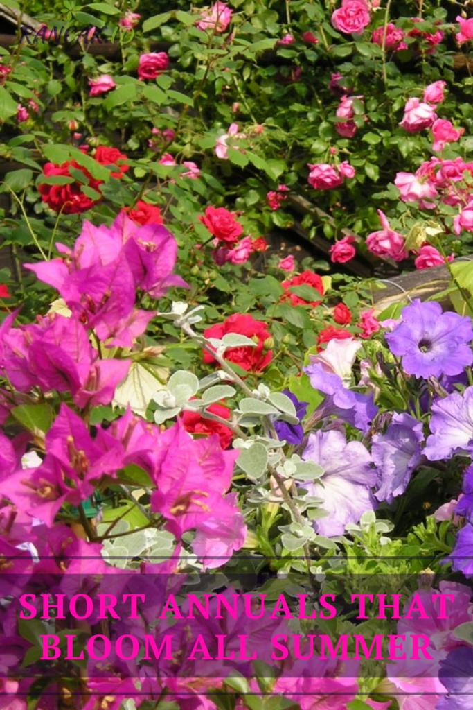 Short Annuals That Bloom All Summer