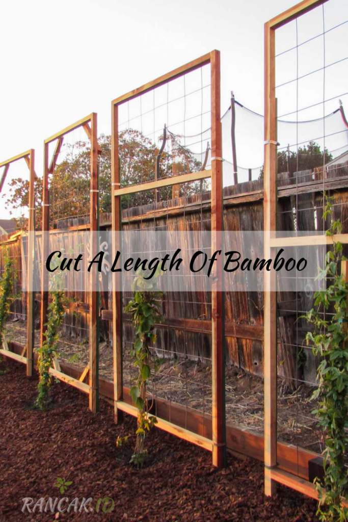 Cut A Length Of Bamboo To The Desired Height DIY Raspberry Trellis.