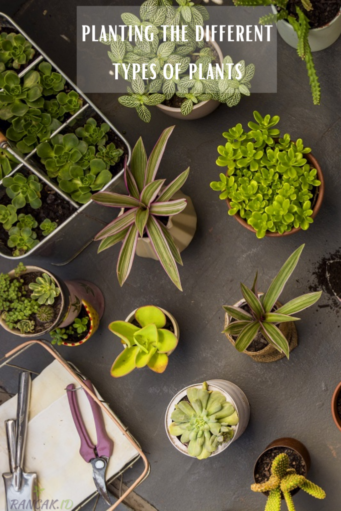 How to go about planting the different types of plants
