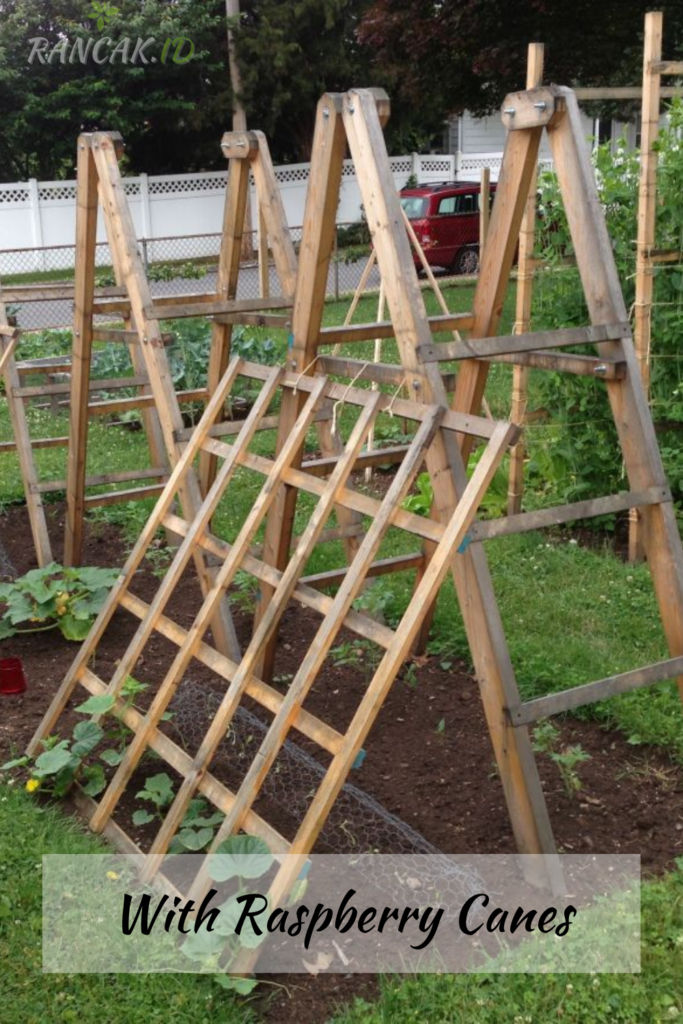 Ill The Inside With Raspberry Canes, Making Sure They'Re Well-Supported And Spaced Out Evenly