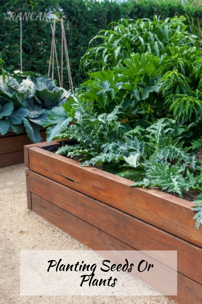 Tips for filling The Beds With Soil And Planting Seeds Or Plants