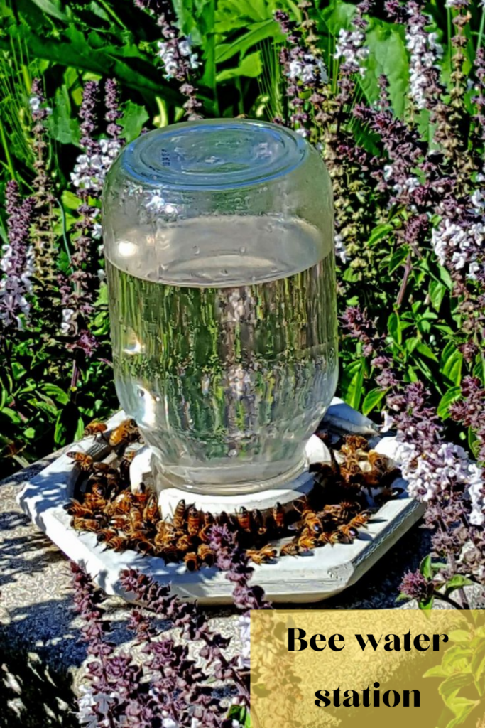 Choose a container for the bee water station.