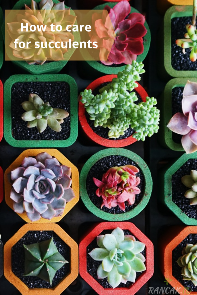 How to care for succulents in a pot or container How