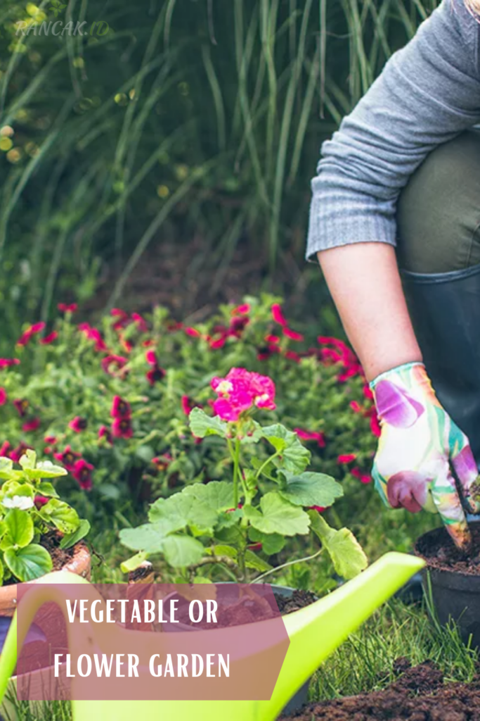 What to Plant When
